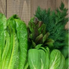Motivos e receitas para colocar os alimentos verdes no pratinho
